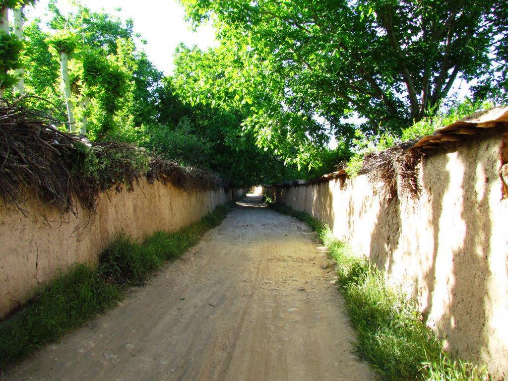 واکنش توییتریها به تغییر کاربری باغهای شیراز: باغها را نخورید