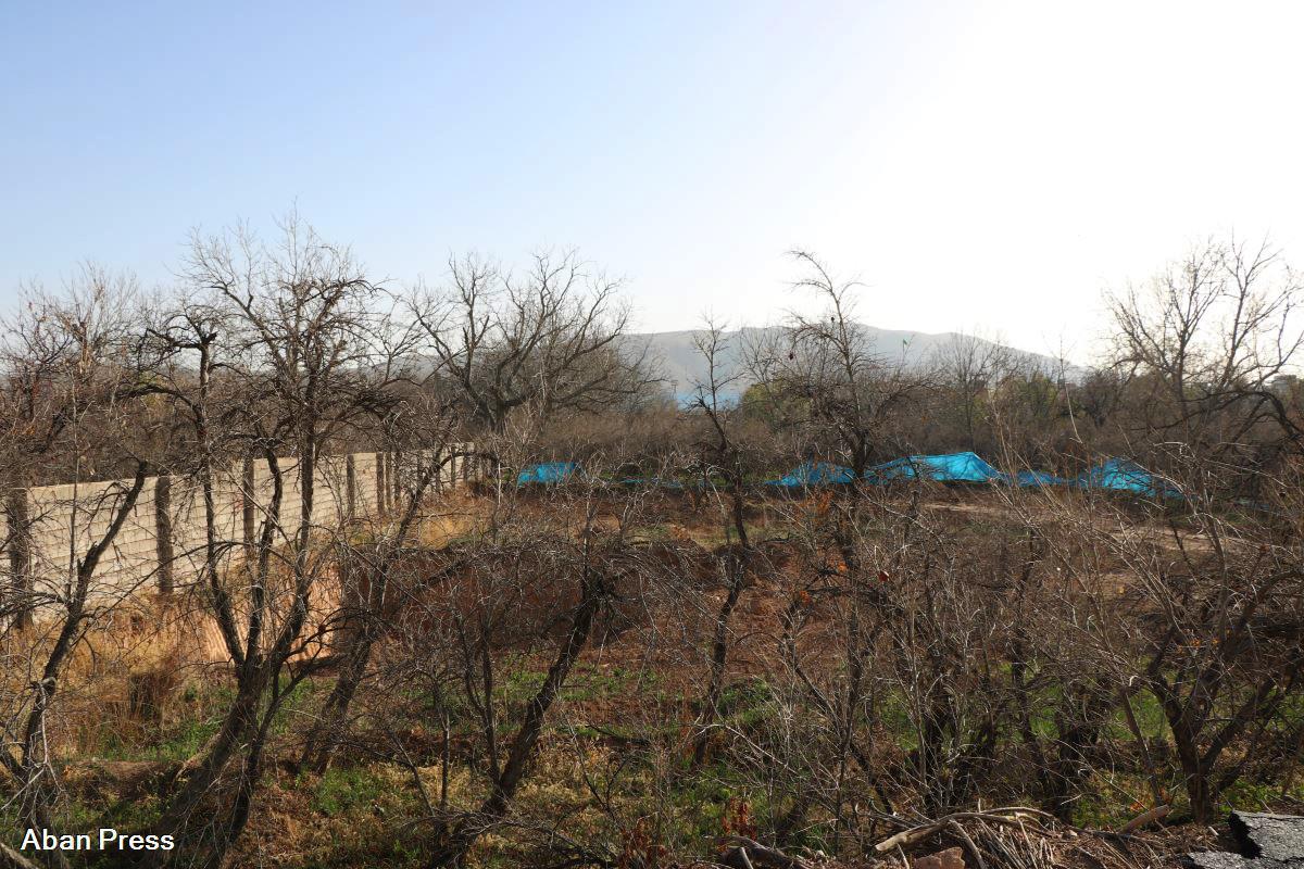 تخریب باغهای شیراز ادامه دارد