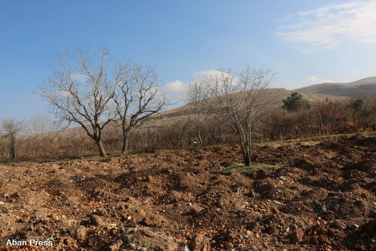 قطع دهها درخت در حاشیه بولوار چمران شیراز برای ساختمان سازی