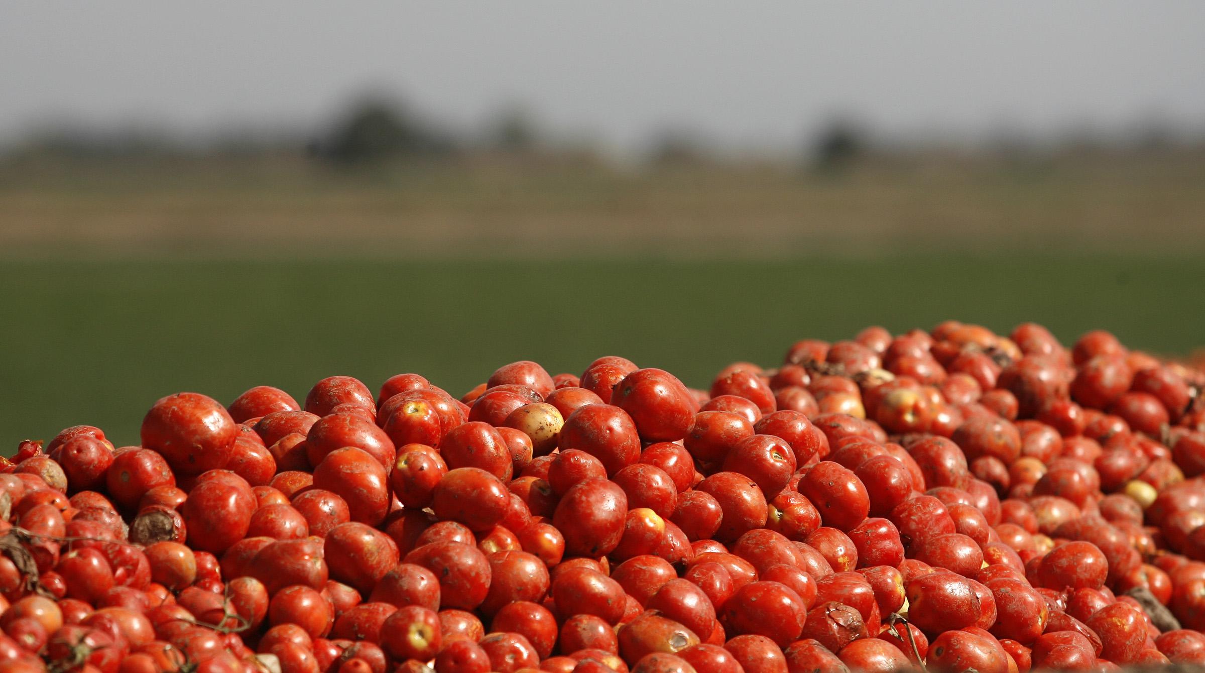 هر کیلو گوجه در شیراز به ۱۶ هزار تومان رسید