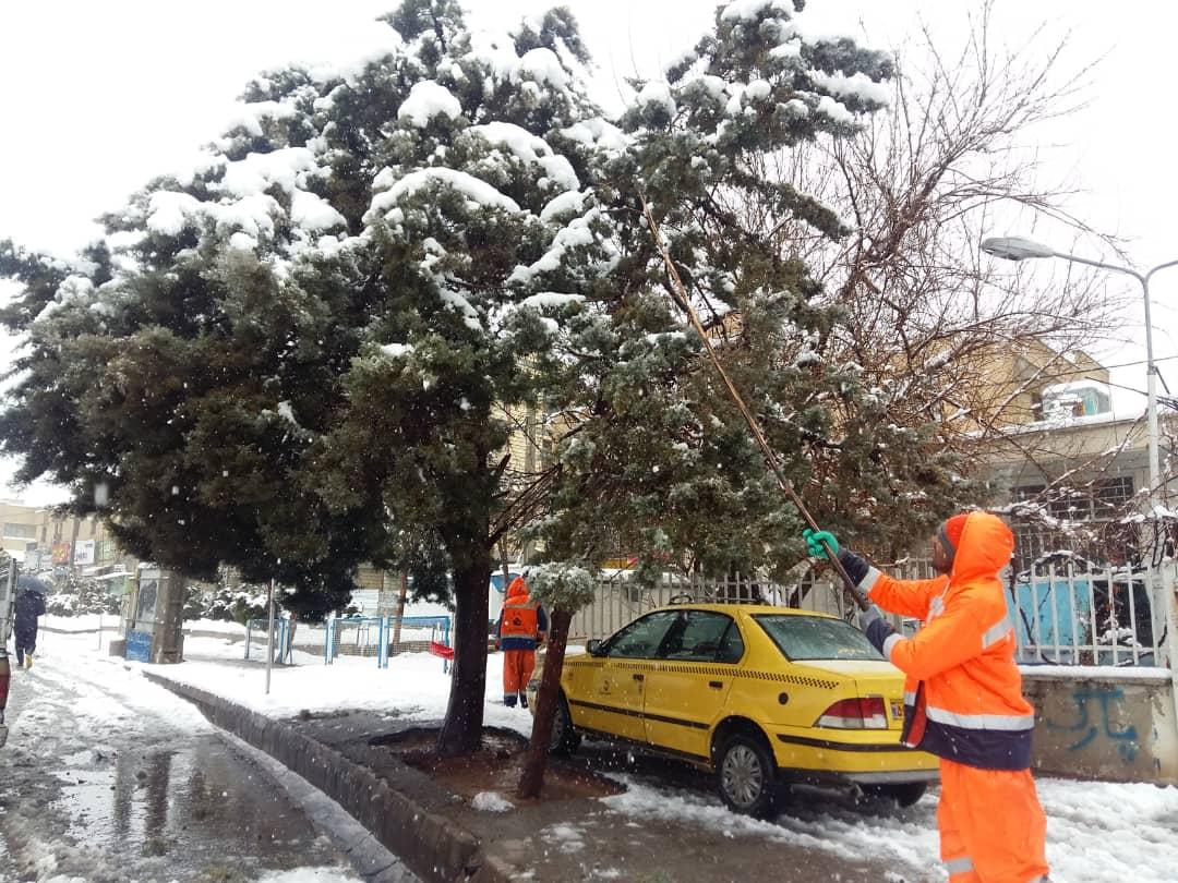 تلاش نیروهای شهرداری شیراز برای برفروبی و درختتکانی