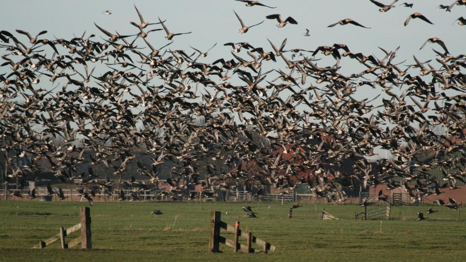 ممنوعیت شکار پرندگان آبزی در فارس به دلیل شیوع آنفلوآنزا