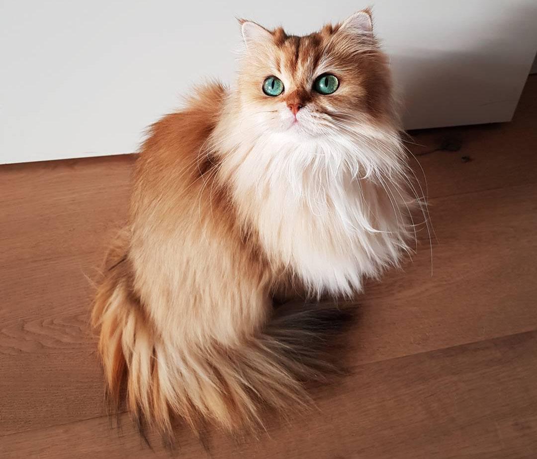 اسموتی، گربهای با بیش از یک میلیون فالوور در اینستاگرام