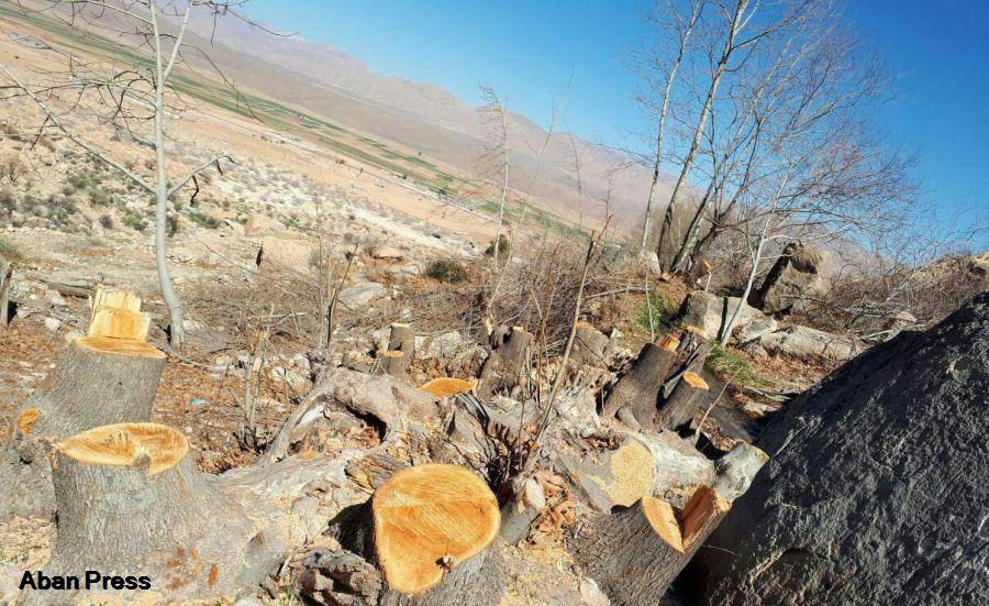 قلع و قمع درختان یک تفرجگاه کهن در استان فارس