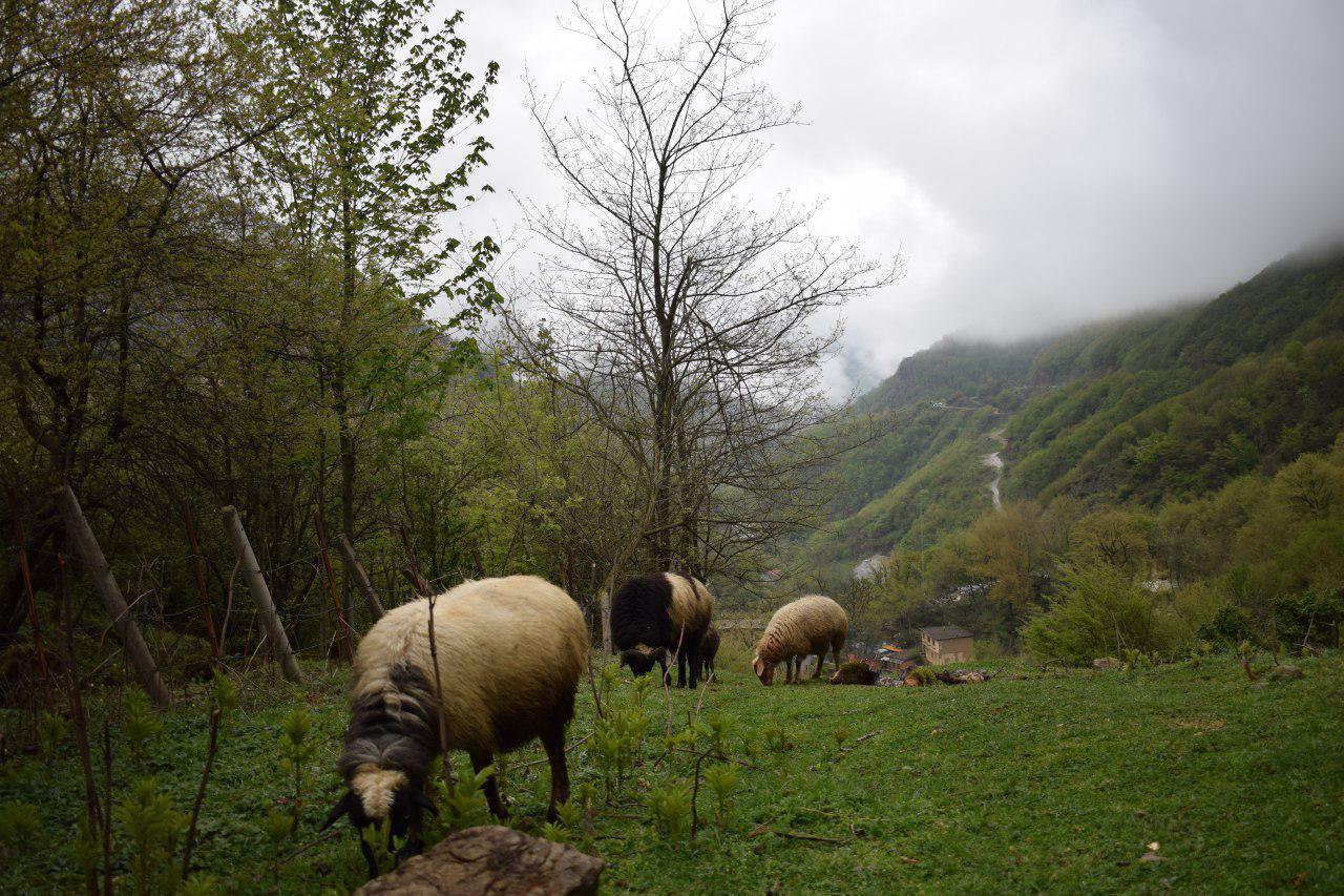 تصاویری از ارتفاعات کوروبار در گیلان