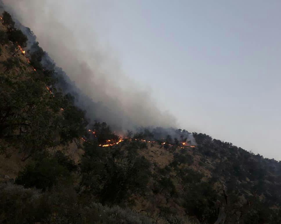 نابودی حجم زیادی از درختان جنگلهای منطقه جره و بالاده کازرون