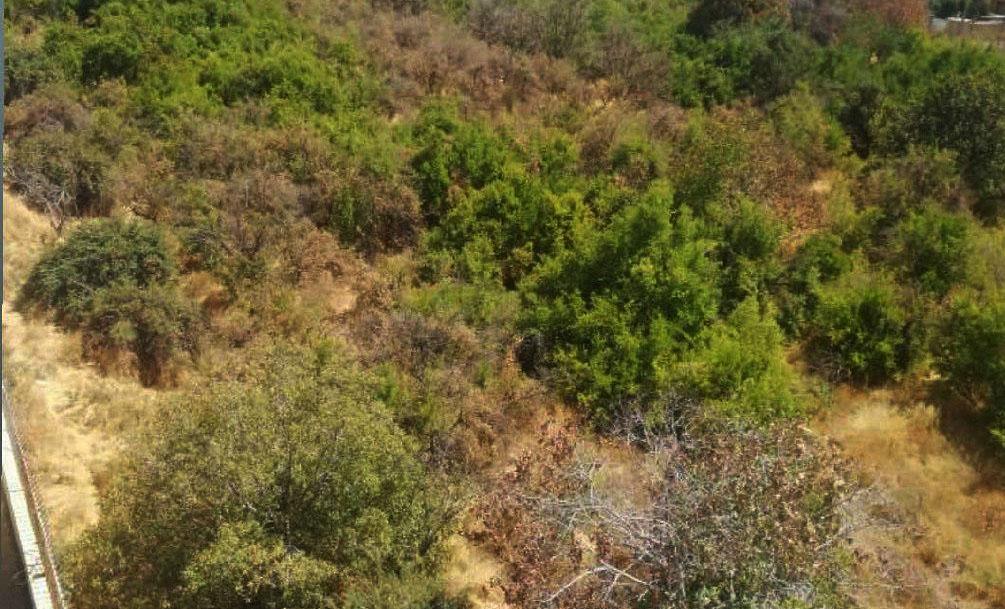 خشکاندن درختان باغ ناصری شیراز
