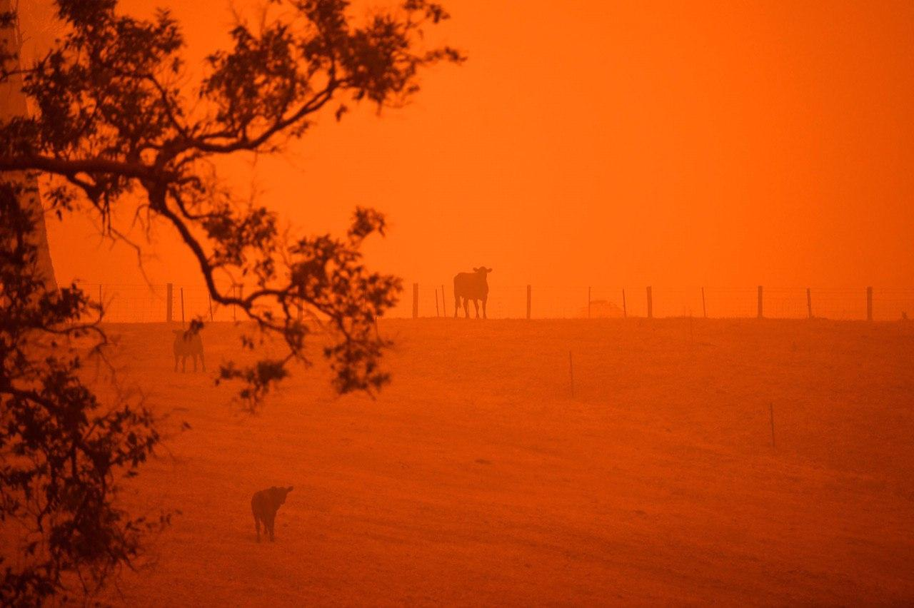 مرگ نیممیلیارد حیوان بر اثر آتشسوزی در استرالیا