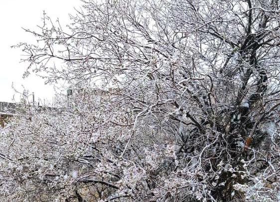 بارش نخستین برف سال در فارس