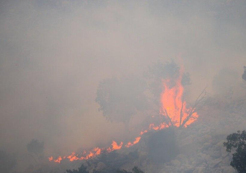 مقام سازمان جنگلها: آتشسوزی یکی از پنج عامل اصلی تخریب سالانه ۱۲ هزار هکتار از جنگلهای ایران است